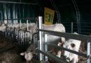 """Terremoto, la Coldiretti: """"Stalle fai da te per 1 agricoltore su 3"""""""