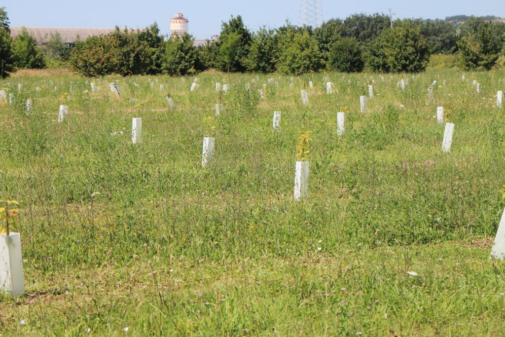 A Pesaro nasce un bosco con 4mila piante