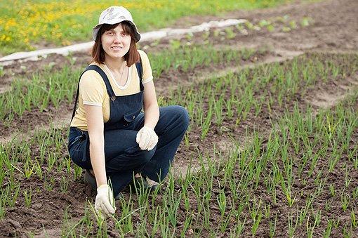 Quest'anno boom di giovani occupati in agricoltura