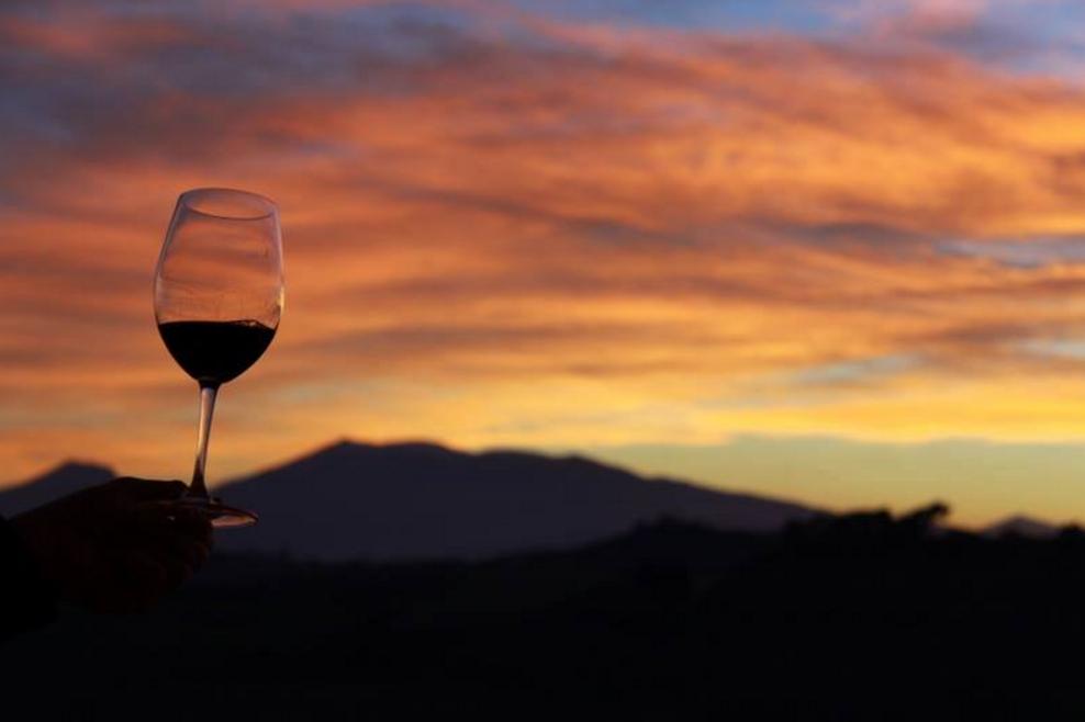 Nelle Marche la vendemmia entra nel vivo mentre cresce l'export di vino (+4%)