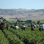 Più giovani in agricoltura, continua l'impegno della Regione