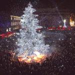 L'albero di Natale più bello, quello di Pesaro si propone per la rubrica del Tg2