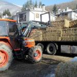 La solidarietà non si ferma, in una settimana donati mille quintali di fieno per le stalle terremotate