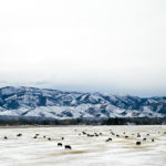 LE MARCHE DA RICOSTRUIRE / Prime vittime tra gli animali sepolti dalla neve