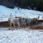 E' allarme nelle fattorie delle Marche: in 5 anni scomparsi 25mila animali