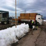Donati fieno, paglia e mangimi a 39 aziende zootecniche terremotate