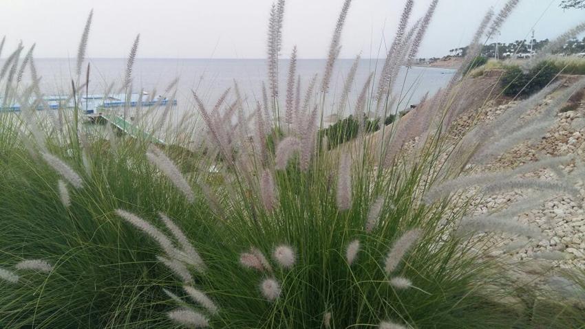 Alla scoperta di un'agricoltura ecofriendly e biorganic a tre ore di volo dall'Italia