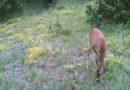 L'Unicorno esiste davvero: avvistato sui Monti Sibillini