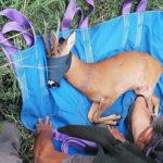 Grazie agli specialisti del Parco dei Monti Sibillini salvato e trasferito un giovane capriolo