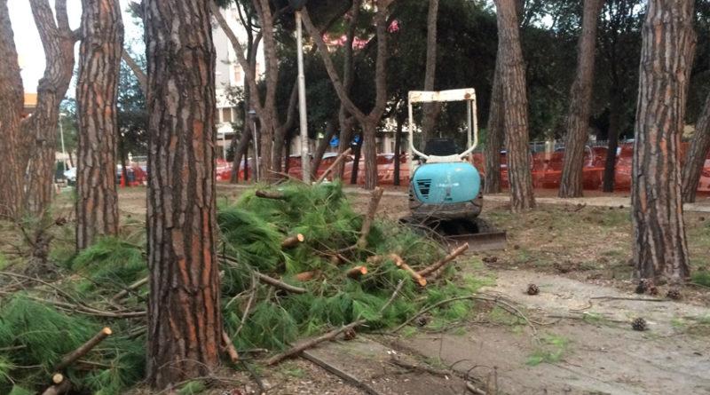 """""""Basta abbattere alberi"""" Dura presa di posizione di Italia Nostra Marche"""