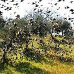 Caccia immediatamente sospesa in tutti i siti Natura 2000