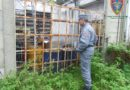 Sequestrato a Pesaro dai Carabinieri Forestali un deposito di rifiuti