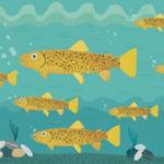 La fauna ittica nei fiumi delle Marche, ad Ancona incontro con il professor Vincenzo Caputo Barucchi