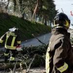 Il vento forte ha colpito le Marche: abbattuti alberi, cartelloni, pali ed insegne