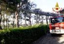Un grosso pino crea pericoli a Camerano, pronto intervento dei vigili del fuoco