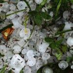 Allagamenti e grandine: nelle campagne si contano i danni