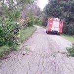 Molti interventi dei vigili del fuoco per liberare le strade bloccate da alberi e rami caduti