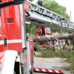 Alberi abbattuti, tetti scoperti ed insegne pericolanti: i vigili del fuoco impegnati su più fronti