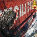 Una civetta resta incastrata in uno scarico, liberata dai vigili del fuoco