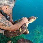 Una tartaruga impigliata in una rete di plastica liberata nel mare di Torrette dai sommozzatori dei vigili del fuoco