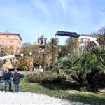Avviato ad Ancona l'abbattimento delle palme colpite dall'infestazione del punteruolo rosso