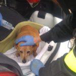 Un cane resta incastrato sotto un'auto, soccorso dai vigili del fuoco