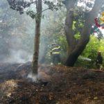 Vegetazione in fiamme a Sirolo, i vigili del fuoco domano subito l'incendio