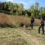 Bocconi avvelenati nei parchi di Pesaro, fatta la bonifica dall'unità cinofila dei Carabinieri forestali