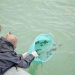 Liberate in mare le tartarughe, plauso di Pesaro alla Fondazione Cetacea e ai suoi volontari