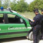 Intensificati dai Carabinieri Forestale i controlli sulle attività di caccia e pesca: sequestrati fucili e mezzi illeciti