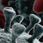 Ultima ora / Coronavirus: quarta vittima nelle Marche, Ceriscioli conferma altri 13 casi positivi