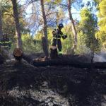 Sterpi in fiamme alle pendici del Conero, pronto intervento dei vigili del fuoco