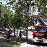 Un ramo pericolante rischia di cadere sopra un bungalow, pronto intervento dei vigili del fuoco