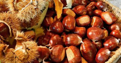 Nei boschi o nei mercati a caccia di bontà: è la stagione delle castagne