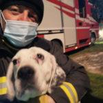 Disavventura a lieto fine per Thiago recuperato dai Vigili del fuoco