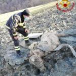 Un cavallo cade in un terreno argilloso, salvato dai Vigili del fuoco