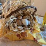 Le uova marchigiane? Quasi la metà da allevamenti biologici
