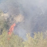 Incendio divora un bosco, sul posto i Vigili del fuoco ed un Canadair / Video