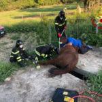 Un cavallo resta incastrato con una zampa, liberato dai Vigili del fuoco