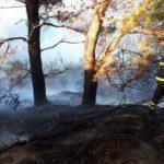 Un vasto incendio di vegetazione nel pomeriggio sulle pendici di Portonovo