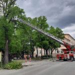 Albero pericolante rischia di cadere sulla strada, rimosso dai Vigili del fuoco