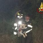 Resta intrappolato tra i rovi, cane liberato dai Vigili del fuoco